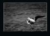 echasse-_V2_2013