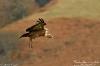 vautour-F_04