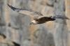 vautour_V80001_03_11