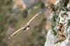 vautour_V800_02_03_11