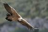 vautour_V800_24_03_11
