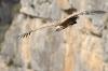 vautour_V800_27_03_11