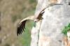 vautour_V88_10_03_11