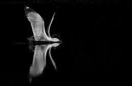 Des plumes en noir et blanc